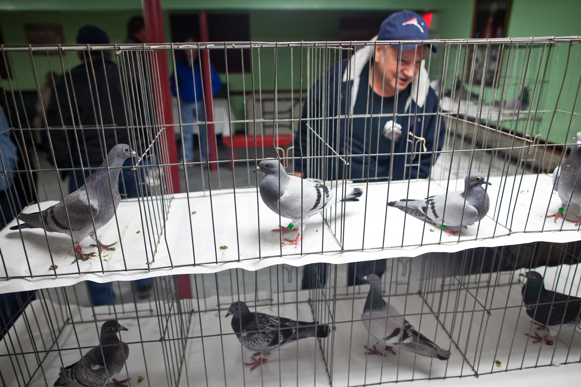 american racing pigeon union auction in new bedford