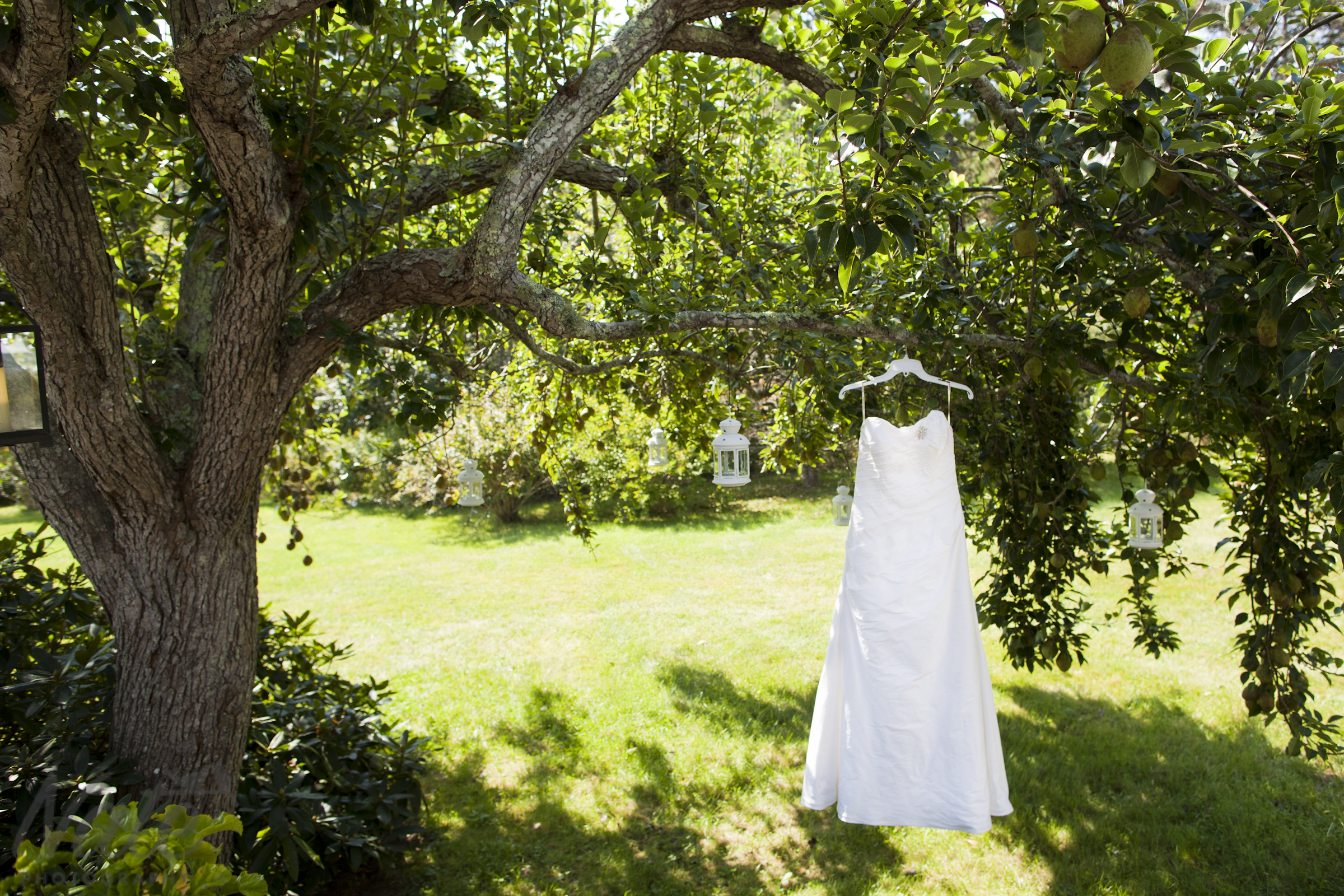 tegan and toph u0027s backyard wedding on martha u0027s vineyard nate